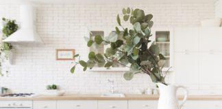 Importance of houseplants